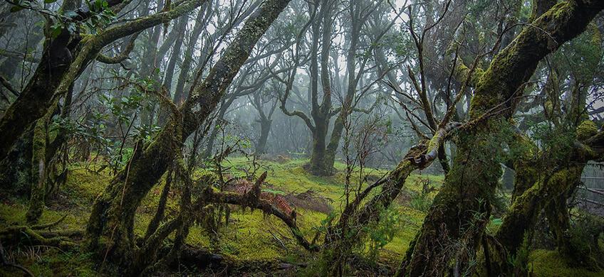 La carretera que lleva al parque nacional de Garajonay a es una de las carreteras más espectaculares de Esapaña